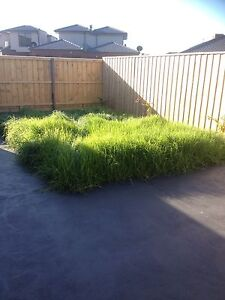 Professional Cheap Lawn Mowing $25 Epping Whittlesea Area Preview