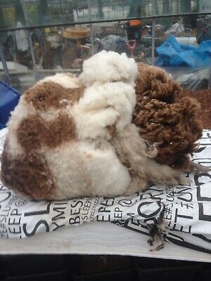 Jacob Sheep Wool Fleeces Qty 2 spinning knitting weaving