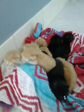 kittens ready in 4 weeks Pine Mountain Ipswich City Preview
