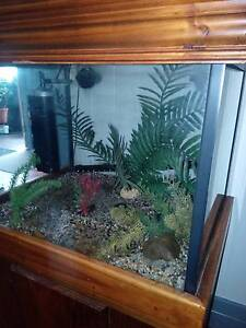 Awesome fish tank Brisbane City Brisbane North West Preview