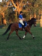 *** HORSE RIDING LESSONS AVAILABLE *** Warragul Baw Baw Area Preview
