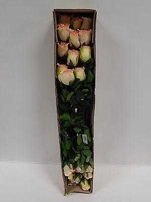 24 x Rose 24tlg Set Seidenblume Kunstblume creme rosa L 70 cm 30673-CRPI F11