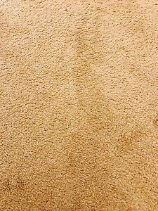 Good Quality Wool Carpet - Cream colour Eastwood Ryde Area Preview