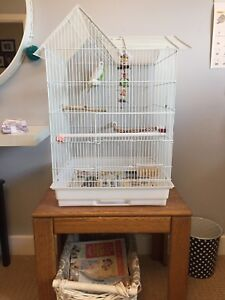 2 sweet budgies and their cage and all accessories for rehoming