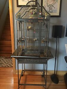 2 Male Cockatiels with Beautiful Cage!