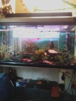 Unique Fish Tank Package