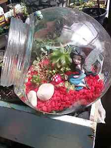 Terrarium with succulents Clarendon Vale Clarence Area Preview