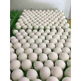 50 Northern Bobwhite Quail Hatching Eggs  *NPIP CERTIFIED*