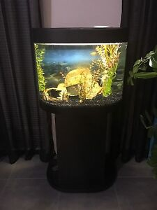 FISH TANK ON STAND FULL SETUP INCL FISH calls or txt only Byford Serpentine Area Preview