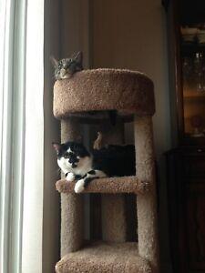REWARD FOR RETURN: MISSING CATS