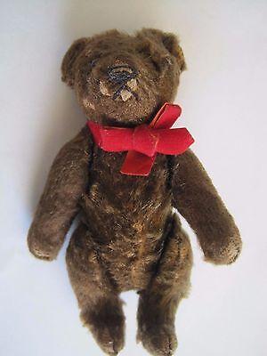 "Collectible Steiff Bear 6"""