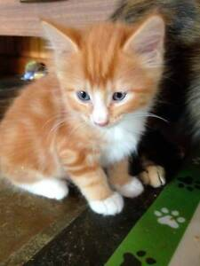 6 beautiful kittens free to good home. Congupna Outer Shepparton Preview
