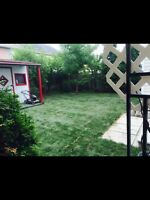 Professional Landscaping, Specializing in Sod Installation