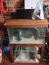 Salt water fish tank Woodcroft Blacktown Area Preview