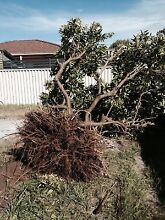 Relocating trees. Carlisle Victoria Park Area Preview