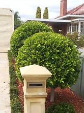 CANNOT MANAGE YOUR GARDENS ANY MORE, DO YOU NEED SOME HELP Parafield Gardens Salisbury Area Preview