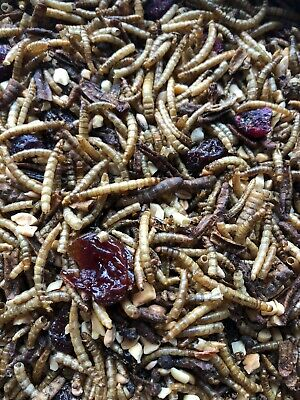 Non-gmo Organic Mealworm Berry Mash Up Chicken Treat