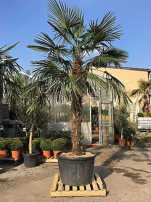 lisas-pflanzenparadies
