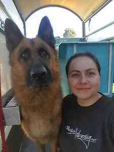 Tam's mobile dog wash Walkerville Walkerville Area Preview