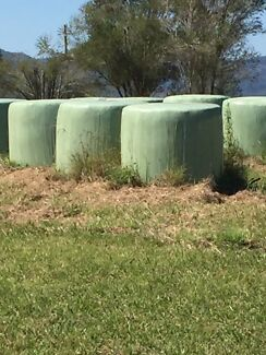 Kikuyu silage solid bales Barrington Gloucester Area Preview