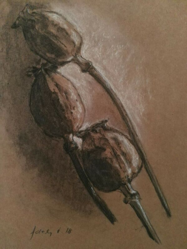 Dried+Poppy+Pods+Art+Drawing+Mixed+Media+Charcoal+Chalk+Brown+Original+Botanical