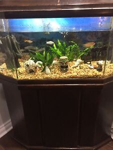 22 gallon fish tank with stand fish and vegetation