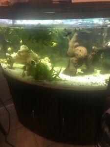 Fluval Bow 45 Tank and Stand Kit and decor