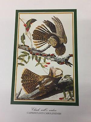 Audubon - CHUCK WILL'S WIDOW Birds - Bird Print 25.5 cm x 19.5 cm Vintage Art