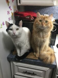 Fynn (left) poe(right) free to good home