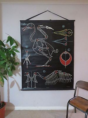 VINTAGE DR AUZOUX SOUGY PULL DOWN SCHOOL WALL CHALK CHART PIGEON BIRD ZOOLOGICAL