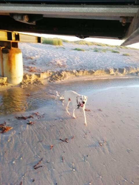 Dog free to GOOD home | Dogs & Puppies | Gumtree Australia