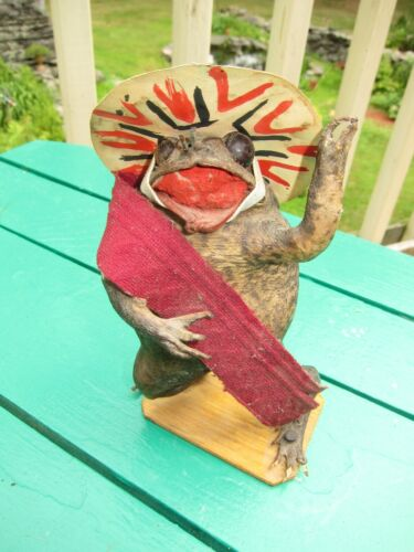 Vintage Taxidermy Mexican Folk Art Stuffed Frog with Sombrero
