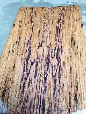 Dyed oak burl lumber for luthier GUITAR top BASS or CRAFT carvetop exotic wood for sale  Shipping to Canada