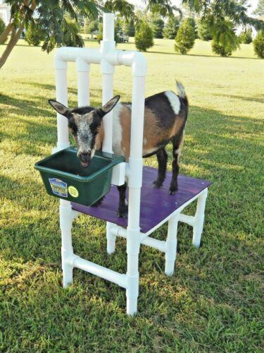 Goat Milking Stand Nigerian Dwarf Pygmy Milk Feed Bucket Weighs Only 25 lbs
