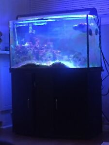 Salt Water Tank (45 gallon) lots included!