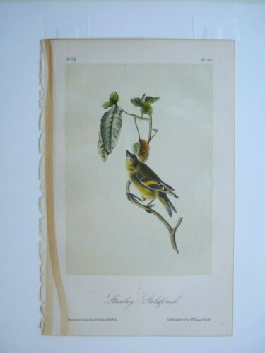 Stanley Goldfinch Audubon Color Print Octavo Edition 1850s plate #185
