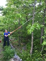 Tree Trimming/Removal/Limbing/Pruning/Cleanup (small jobs)