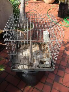 Galah cage Athelstone Campbelltown Area Preview