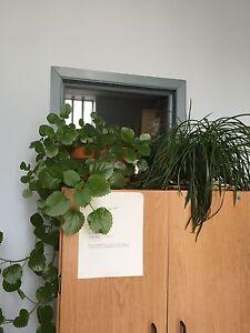 Miscellaneous plants for sale