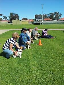 Fun Day Out with your best Buddy (All small dog breeds Welcome) Kilburn Port Adelaide Area Preview