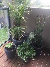 Plants for sale Bulleen Manningham Area Preview