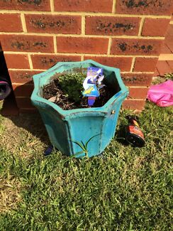Plants for sale Mundaring Mundaring Area Preview