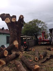 Trees&stumps solutions Russell Lea Canada Bay Area Preview
