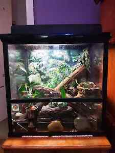 Frog enclosure, complete set up with 3 green tree frogs Bonbeach Kingston Area Preview