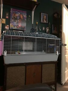 Guinea pig and the whole set up