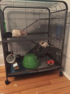 Rats and large rat cage
