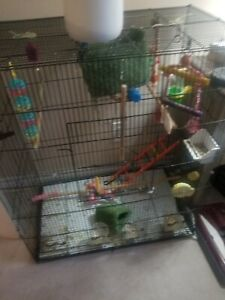 A big cage for sale, come with toys , parches