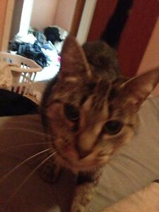Beauftiful and loving 2 and a half year old female  Windsor Region Ontario image 1