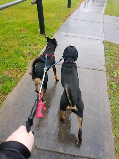 Dog walking for when lifes got you too busy