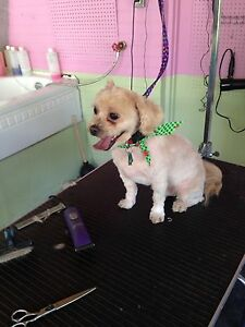 Bellas dog grooming and care London Ontario image 7
